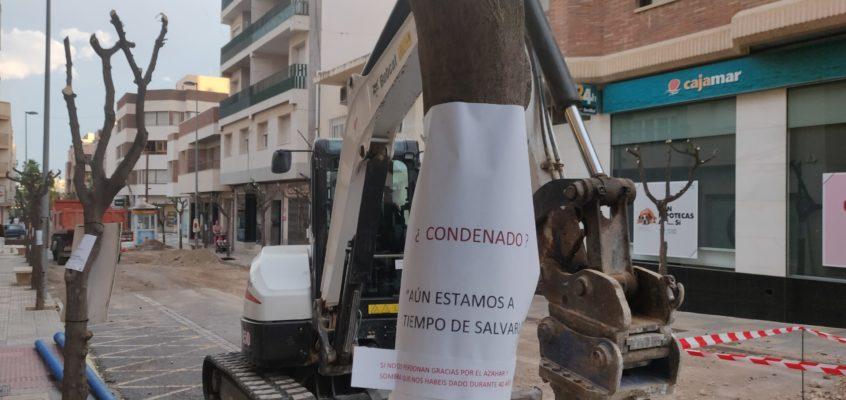 El PSOE de El Ejido lamenta una vez más las formas del equipo de gobierno de PP y VOX al no ofrecer información a los vecinos y sorprenderles con el cambio de arbolado en el centro